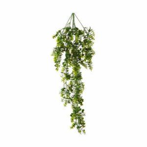 צמח גולש עם עלים דמוי אקליפטוס