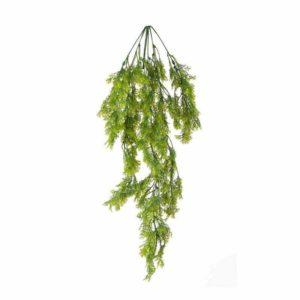 צמח גולש עם עלים דמוי שערות שולמית