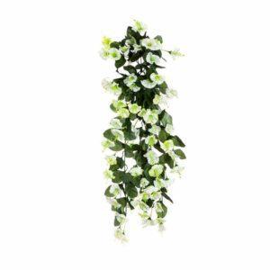 צמח גולש מסוג פיטוניה לבנה