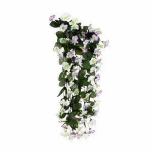 צמח גולש מסוג פיטוניה לבנה סוגלה