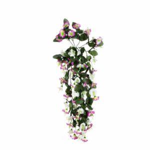 צמח גולש מסוג פיטוניה לבנה סוגלה בהירה
