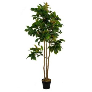 עץ פרי מסוג תפוז ירוק מגיע עומד בעציץ דקורטיבי