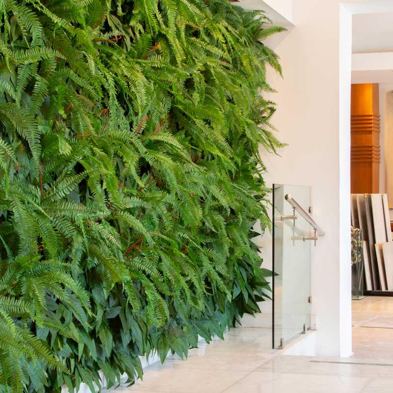 קיר צמחיה ירוק